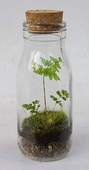Closed Terrarium Guntherwillems Com